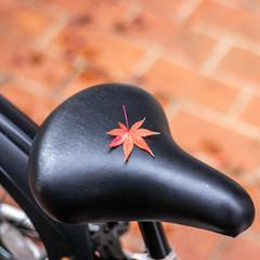 ველოსიპედის სკამის ფორმა