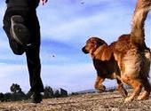 მგზავრები და ძაღლი