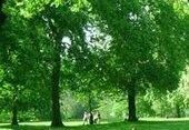 ხეები