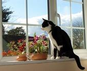 კატა და სახლი