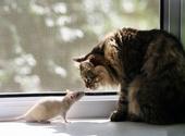 კატები და თაგვები