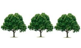 სამი ხე