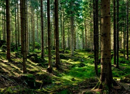 ვასწავლოთ ბავშვებს სწრაფი კითხვა - მეათე მეცადინეობა - ტყე