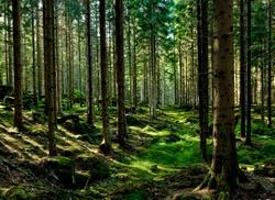 ნაწერისა და ნახატის გარჩევა - მეათე მაცადინეობა - ტყე