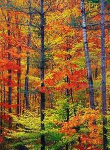 საქართველოს ტყეები