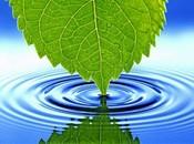 წყლის მნიშვნელობა