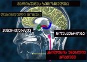 მარიხუანას მოქმედების სიმპტომები