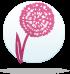 ყვავილების ჰოროსკოპი - ასტრა