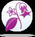 ყვავილების ჰოროსკოპი - ბელადონა  11.02-19.02