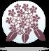 ყვავილების ჰოროსკოპი - ჰორტენზია  11.04-20.04