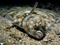ზღვის ჰოროსკოპი - კამბალა