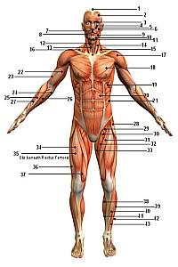 ადამიანის ორგანიზმი