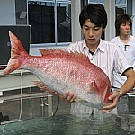 თევზი