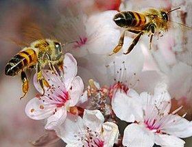 ფუტკრის პროდუქტები