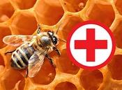 თაფლის მკურნალობის მეთოდები (აპითერაპია)