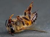 მკვდარი ფუტკრები (პოდმორი)