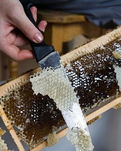 ფუტკრის ანათალი თაფლის ფიჭის ზოლებად დაგმანული სახურავია