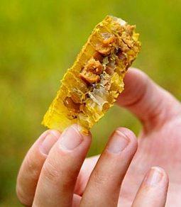 ფუტკრის პური (ჭეო) - რა არის ჭეო?