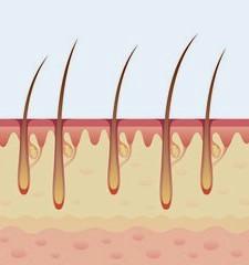 როგორ არის აგებული ადამიანის თმა