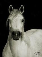 ცხენის ყიდვა