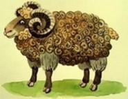 რამდენი ცხვარი ჰყავდათ მწყემსებს