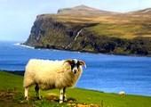 როგორ გადავარჩინოთ ცხვრის ფარა?