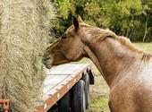გონიერი ცხენი