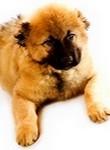 ძაღლების გამოფენა