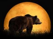 რა ფერისაა დათვი?