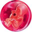 ფეხმძიმობის 23-ე კვირა