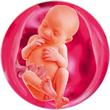 ფეხმძიმობის 26-ე კვირა