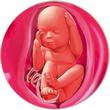 ფეხმძიმობის 27-ე კვირა