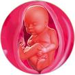 ფეხმძიმობის 28-ე კვირა