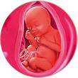 ფეხმძიმობის 29-ე კვირა