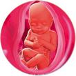 ფეხმძიმობის 32-ე კვირა