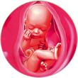 ფეხმძიმობის 37-ე კვირა