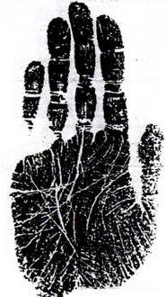 იდეალური-გრძელი ტიპის ხელი